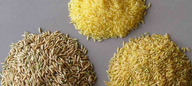 Will GMO rice help fight climate change? | Sustainability = Smart ...