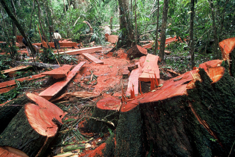 deforestation problems and solutions