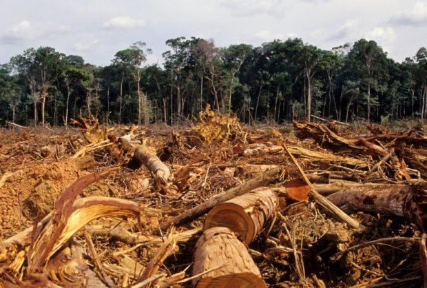 deforestation_istock