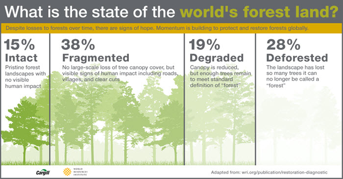 environmental impact of deforestation on humans